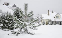 AL-KO Tipps - Schnee auf Bäumen und Sträuchern - Was ist zu tun?
