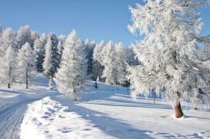 AL-KO Schneefräse Snowline 620 E II Winterdienst auch bei tiefsten Temperaturen
