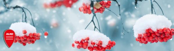 al-ko_schneefraesen_snowline_schnee_im_garten_header